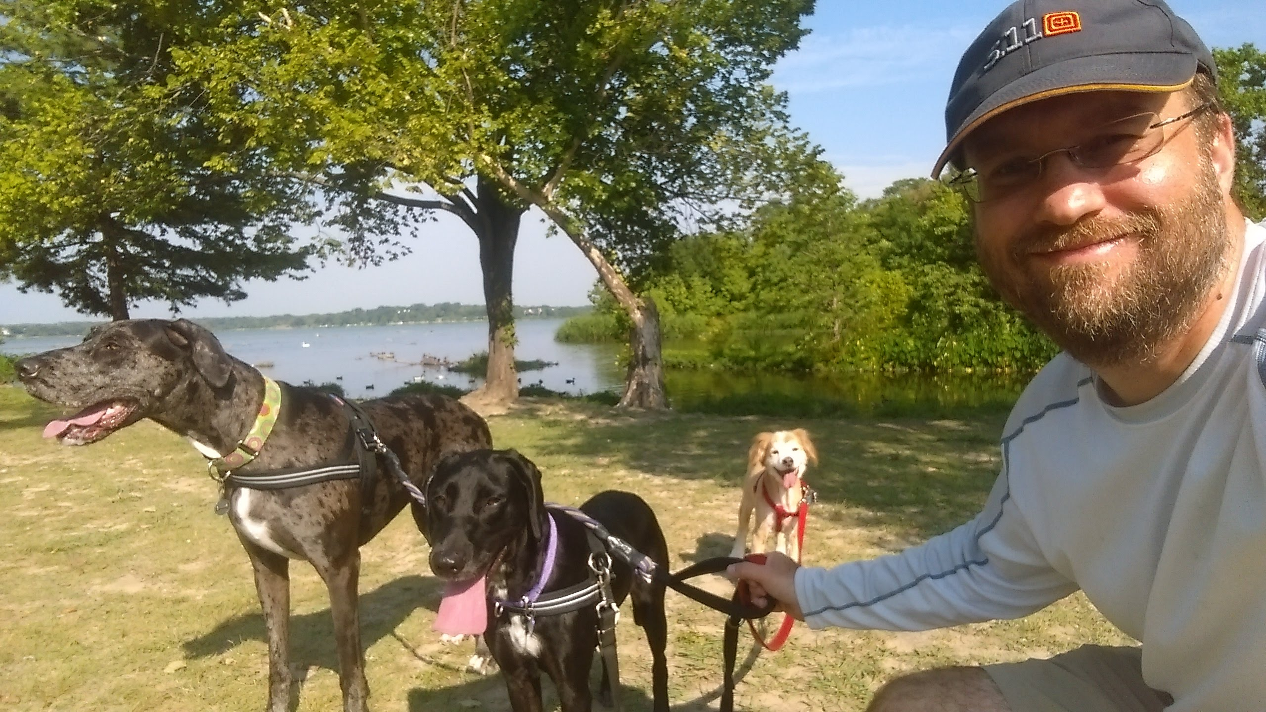 dog walking at white rock lake in east dallas