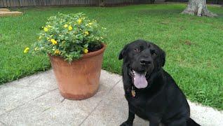 Jolly Pup Dallas Dog Walker Walking Training