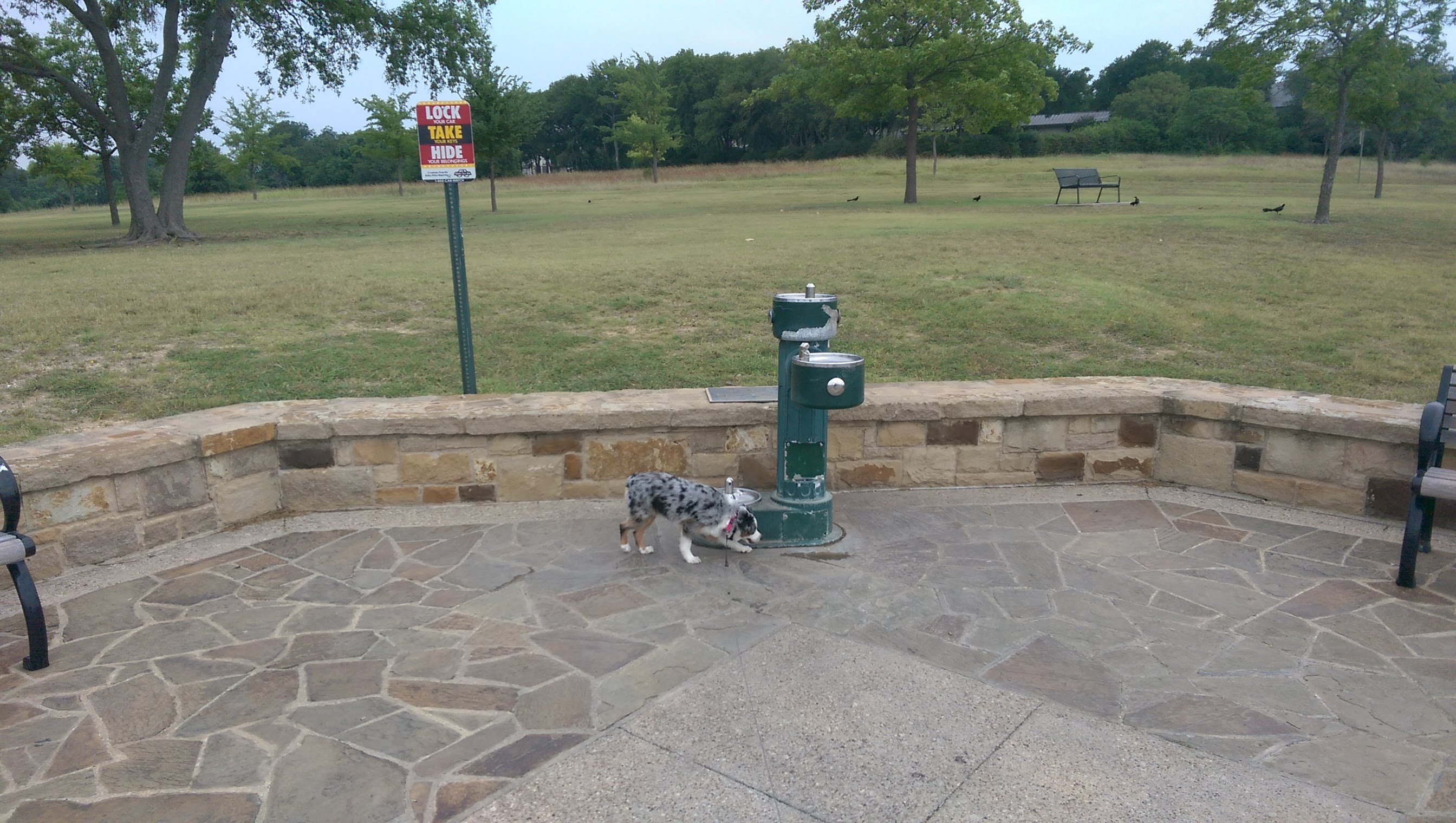 locations of water fountains at white rock lake for dallas dog walkers